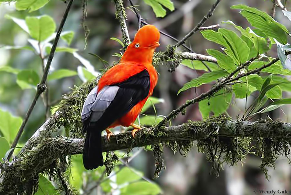 Bellavista-Cloud-Forest-Reserve-and-Lodge, Bed-&-Birding, Accommodation-for-Birdwatchers