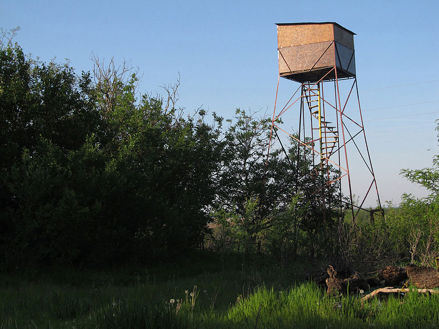 Tower hide, bird photography