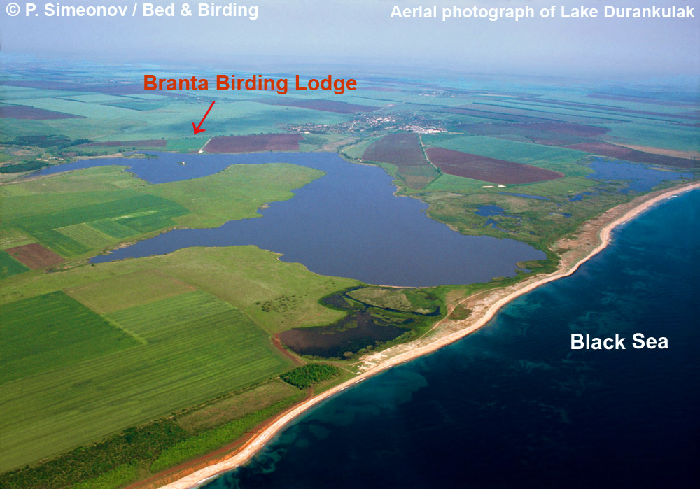 Lake-Durankulak, Black-Sea-coast, Bed-&-Birding, Branta-Lodge, Paddyfield-Warbler