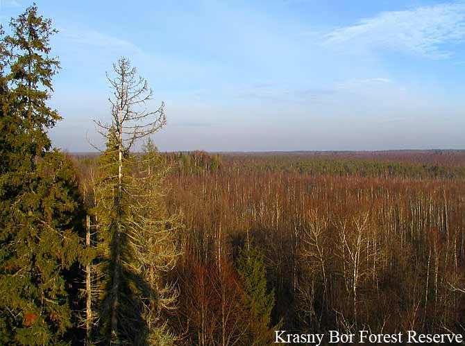 Krasny-Bor-Forest-Lodge, Birdwatching-in-Belarus, Accommodation-for-birdwatchers