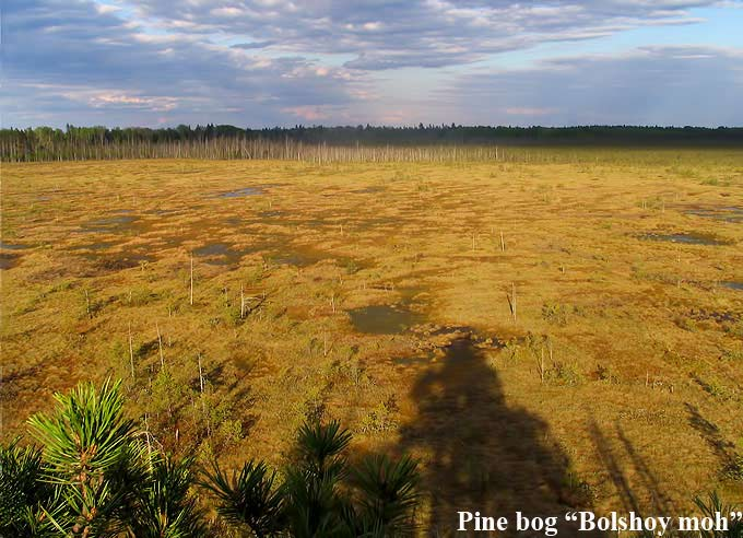 Krasny Bor Forest Reserve, Accommodation for birders, Belarus birding, Bed and Birding, Homes made for Birders
