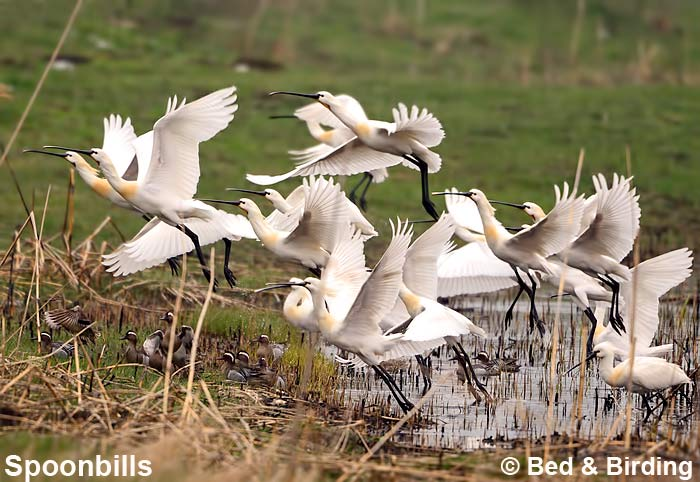 Birdwatching Bulgaria, Burgas Wetlands, Burgas Saltpans, Accommodation for Birdwatchers