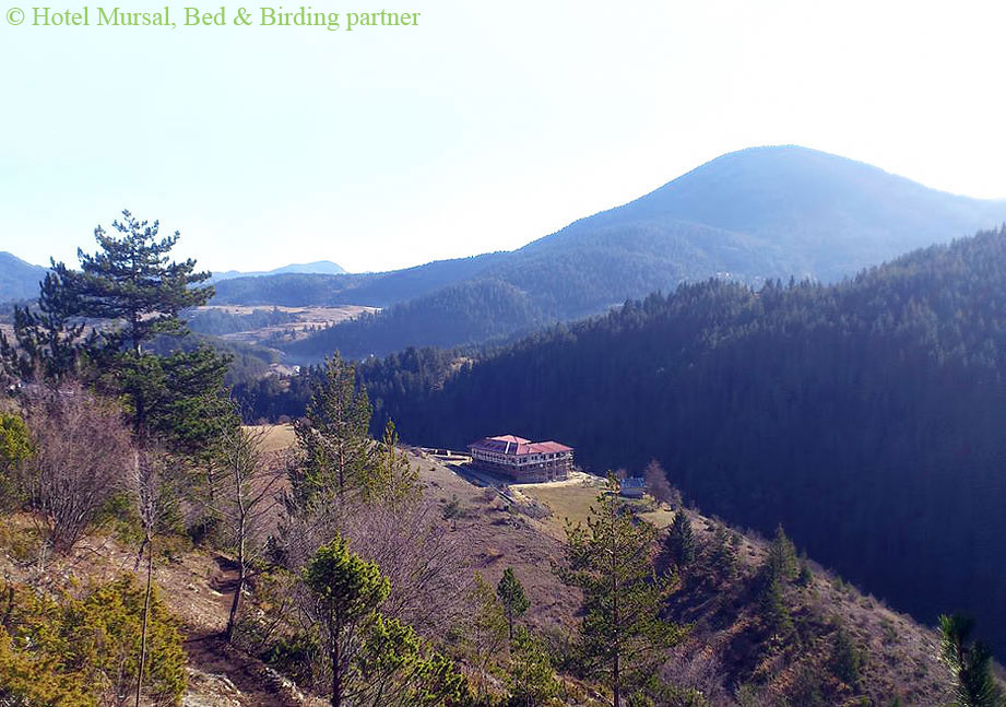Bed-and-Birding-Rhodope-Mountains, Yagodina-village, Accommodation-for-Birdwatchers