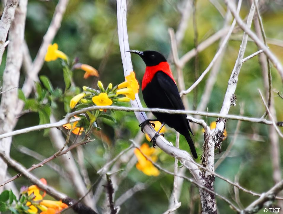 Bed-and-Birding-Papua-New-Guinea, Rondon-Ridge-Lodge, Accommodation-for-Birders