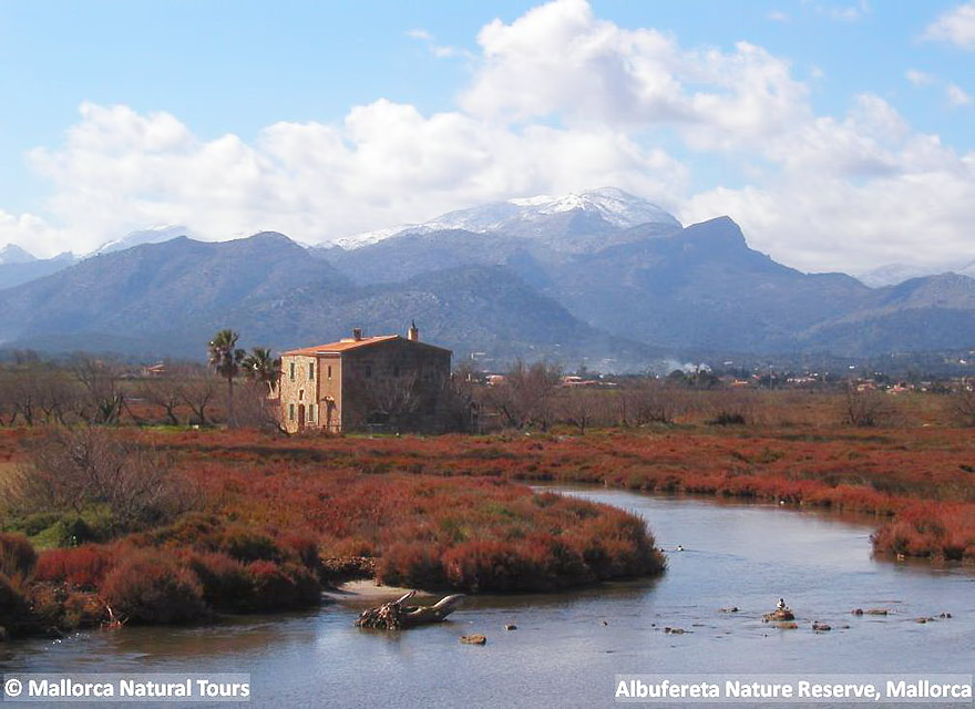 Accommodation for Birders, Bed and Birding Mallorca